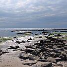 Back Beach 3 - Lyme Regis by Susie Peek