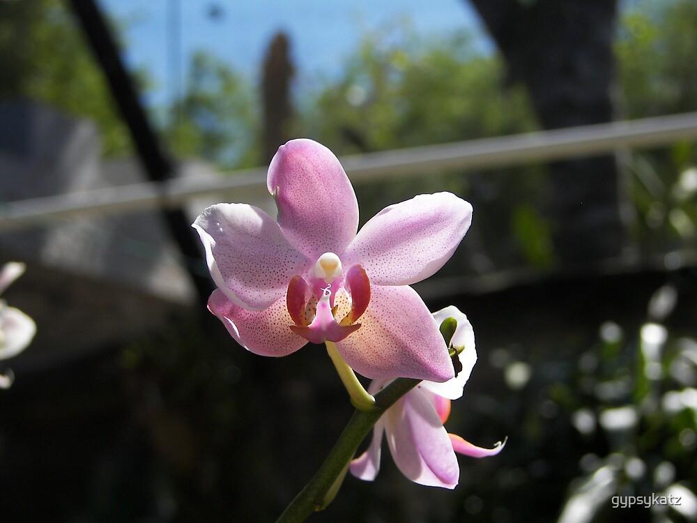 FLOWERS PRETTY IN PINK by gypsykatz