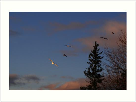 Sunset Riders by Rebecca Brann