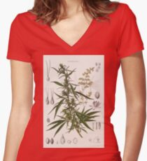 Cannabis Sativa - french botanical entry  Women's Fitted V-Neck T-Shirt