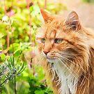 Garden Tabby by Susie Peek