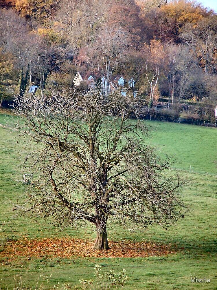 Autumn Tree by Mischa
