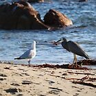 Crab for Breakfast by kalaryder