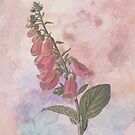 Foxglove by Catherine Hamilton-Veal  ©