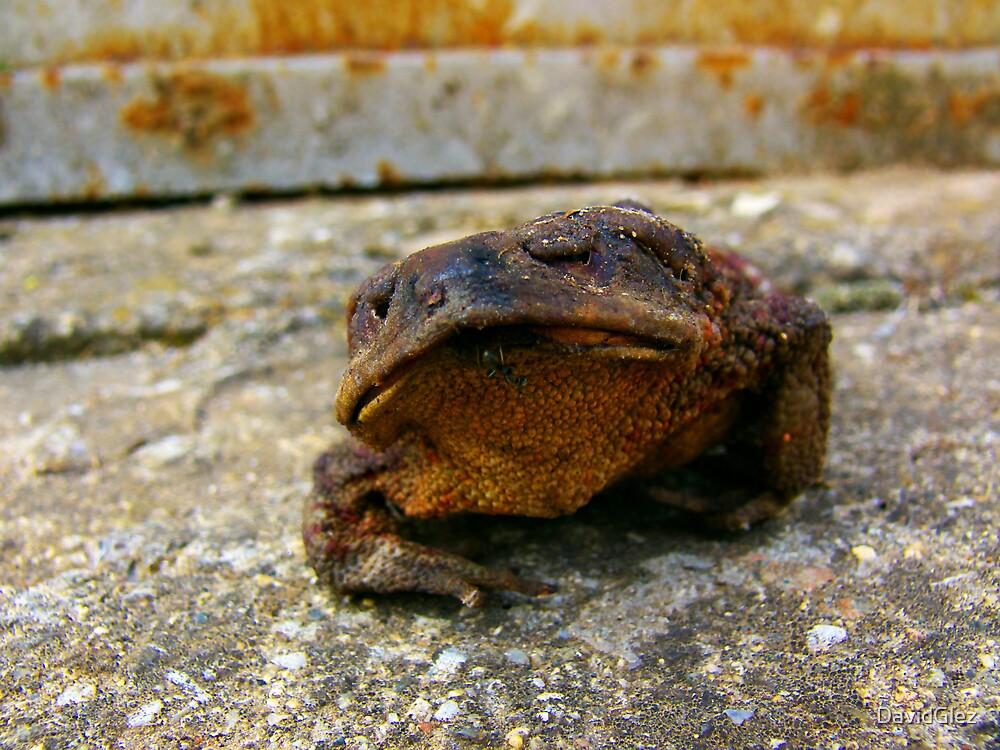 Dry frog by DavidGlez