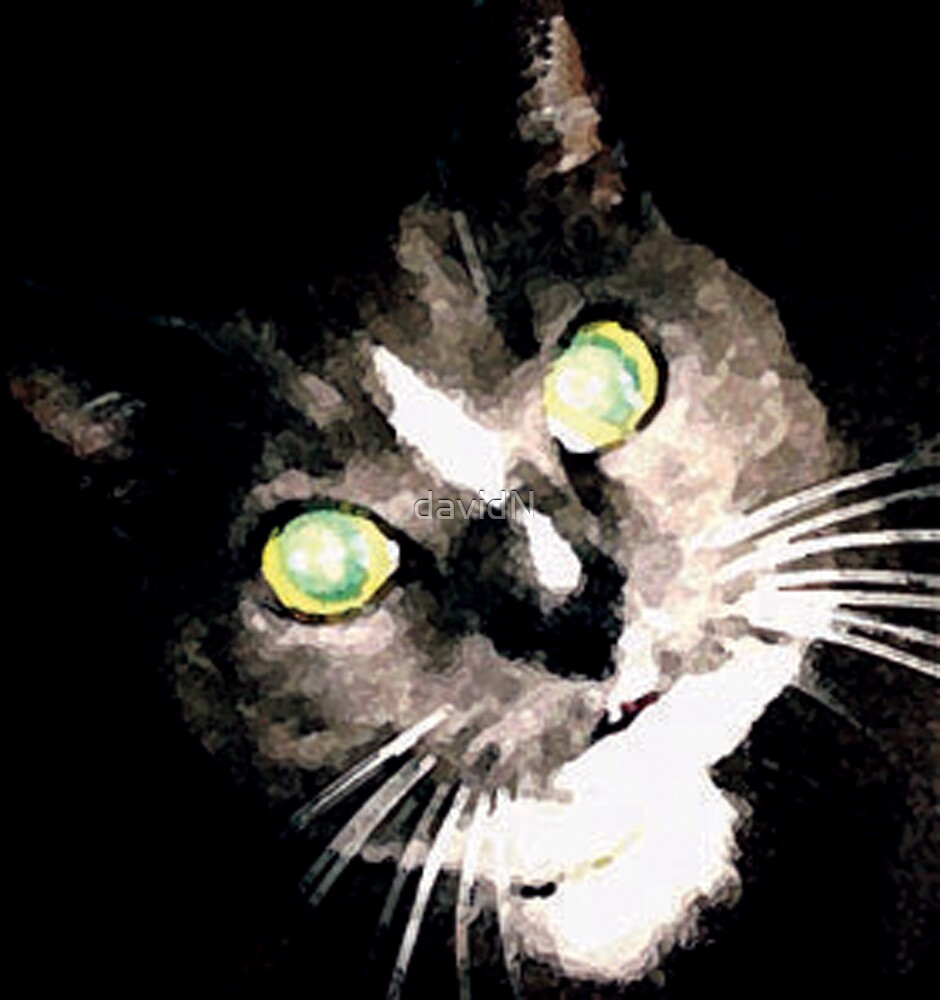 Kitty Kat in Black by davidN