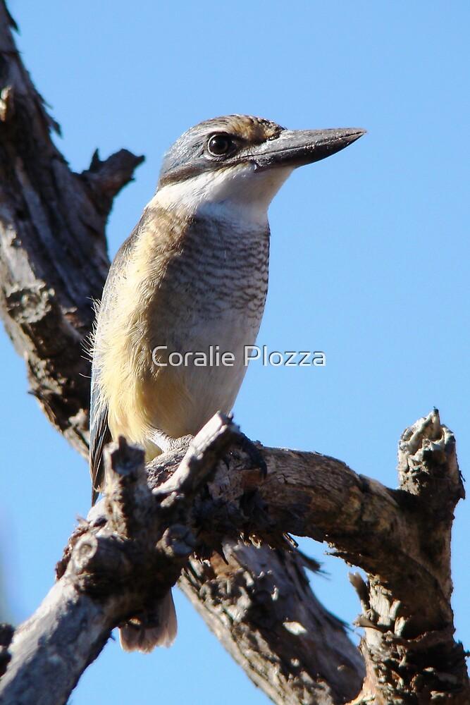 Kingfisher by Coralie Plozza