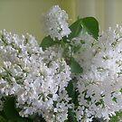 White lilacs by Ana Belaj