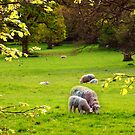 Peace in the Countryside by trish725