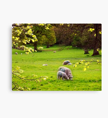 Peace in the Countryside Canvas Print