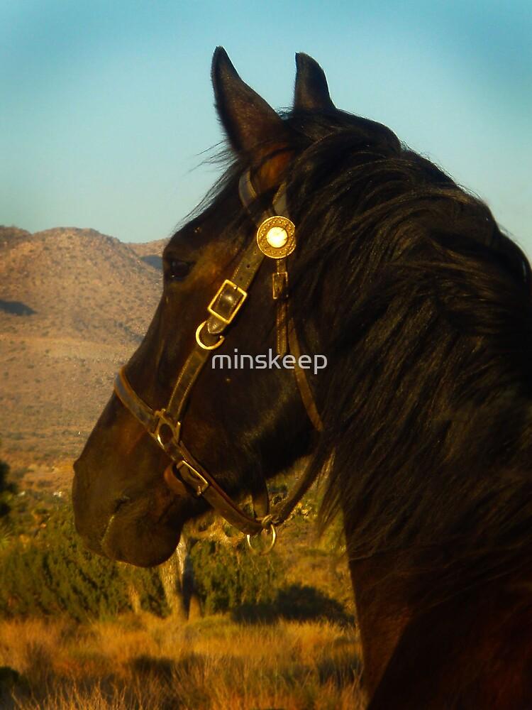 Desert Horse by minskeep