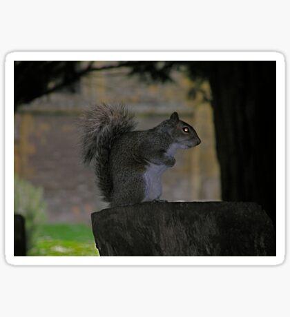 spooky squirrel Sticker