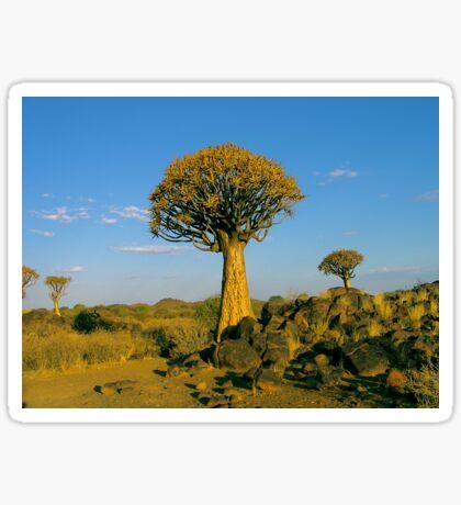 quiver tree in the setting sun Sticker