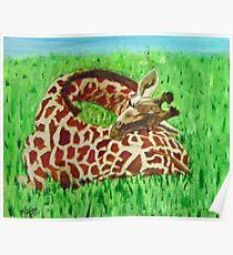 Serenity … a2 Sleeping Baby Giraffe  Poster
