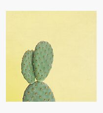 Yellow Cactus Photographic Print