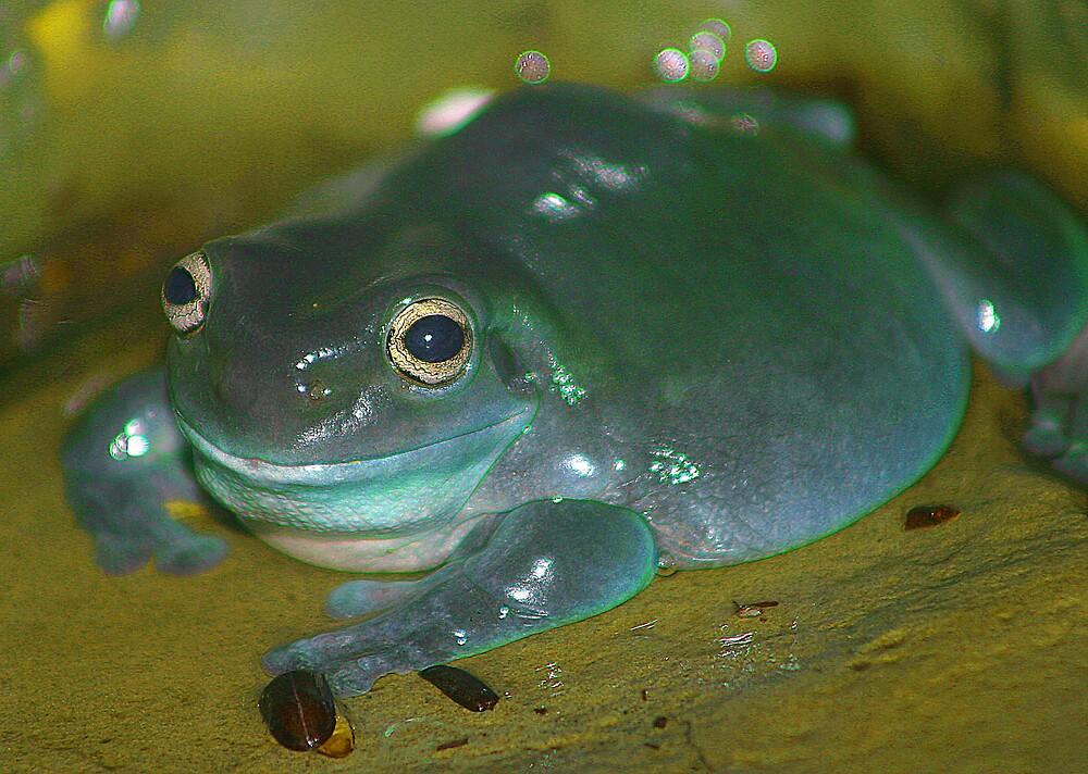 Frog Blog by Beaner