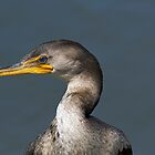 Portrait of a Cormorant by TJ Baccari Photography