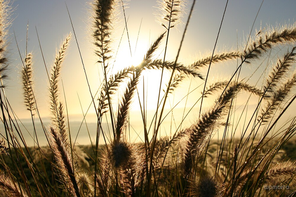Light my wheat by wpmorro