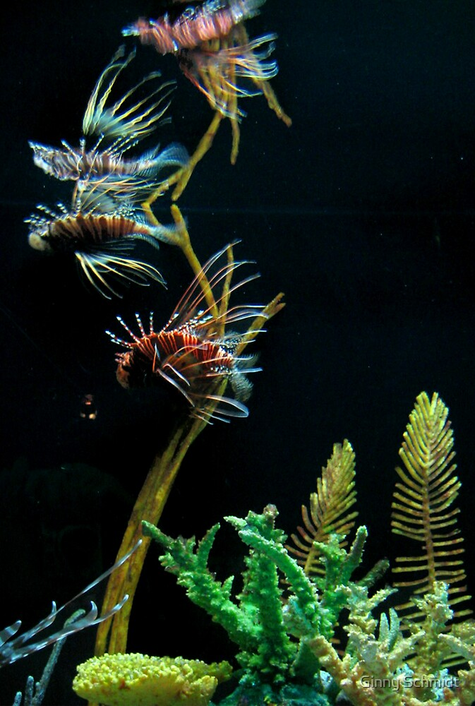 Lionfish Tree by Ginny Schmidt