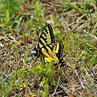 Butterfly In The Grass by Cynthia48