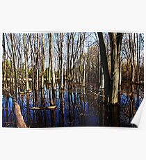 Spring At The Pond Poster