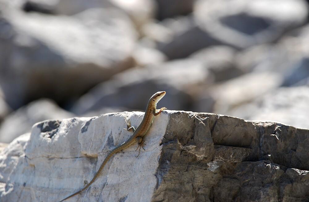 Positano Lizard by simonday