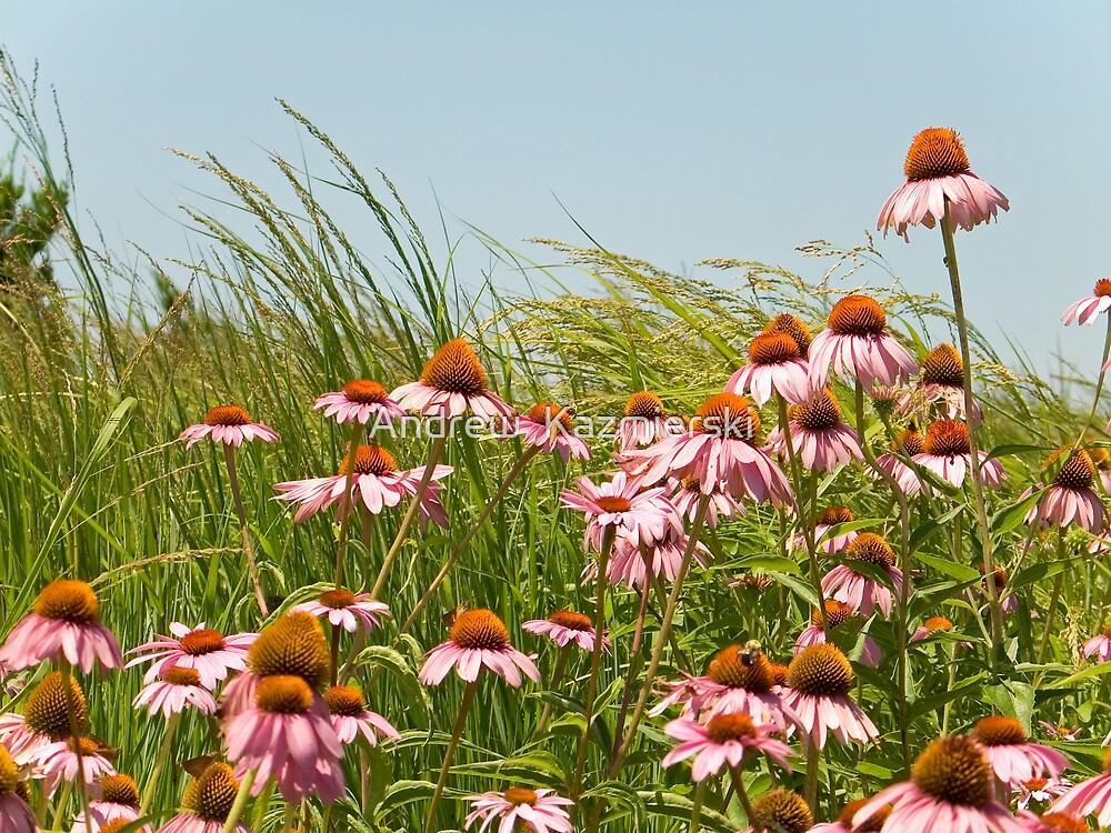 Cone Flowers by andykazie