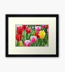 Pick A Color Framed Print