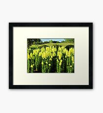 Field Of Yellow Snapdragon Framed Print