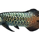 Asian Arowana - light background by rah-bop