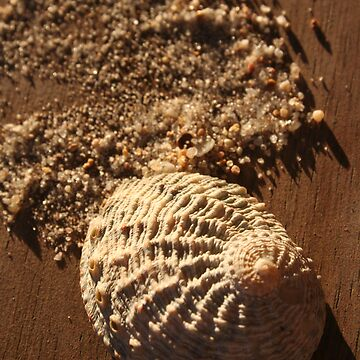 shell and sand by srh22