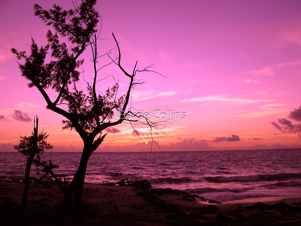 Pink Morning by Barrie Collins