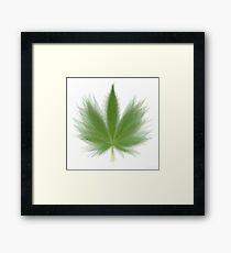 Pot Leaf Overlay Framed Print