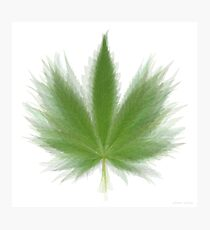 Pot Leaf Overlay Photographic Print