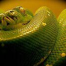 green tree python by mamba