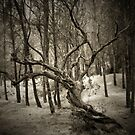 wild tree by Nikos Kantarakias