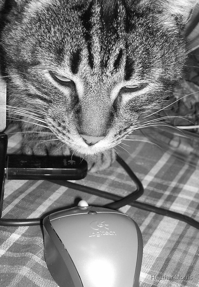 Cat & Mouse by Heather Morris
