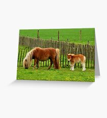 Another Beemster beauty Greeting Card