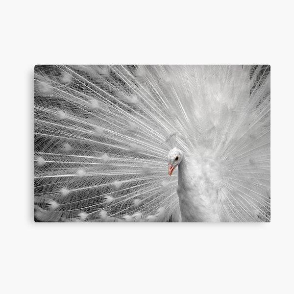 White Princess Canvas Print