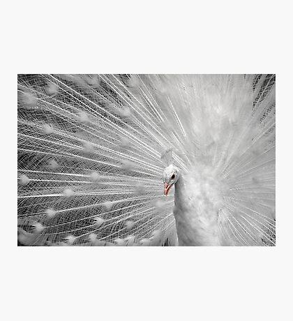 White Princess Photographic Print