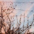 Elder Branches Silhouette by Sandra Foster