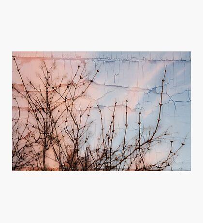 Elder Branches Silhouette Photographic Print