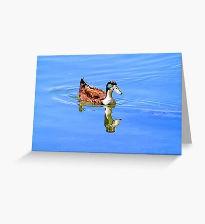 Duck Reflected Greeting Card