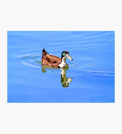 Duck Reflected Photographic Print