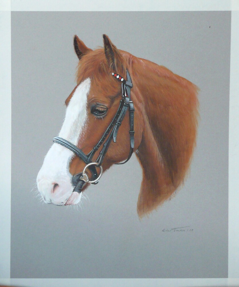 Horse head by Brian Towers