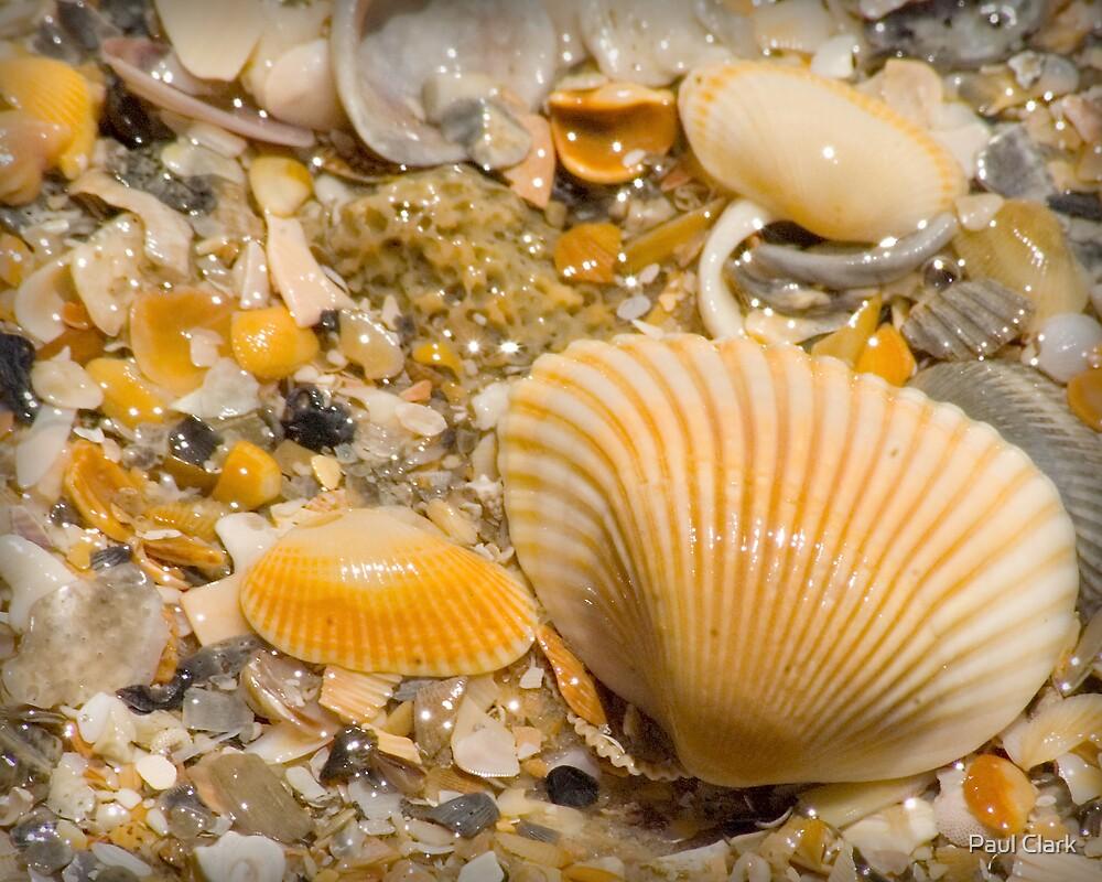 Shells II by Paul Clark