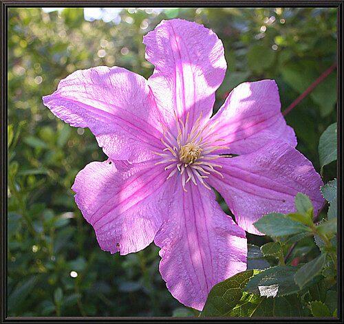 Sunlit Flower by AlexClark