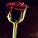 The Rose by Evita