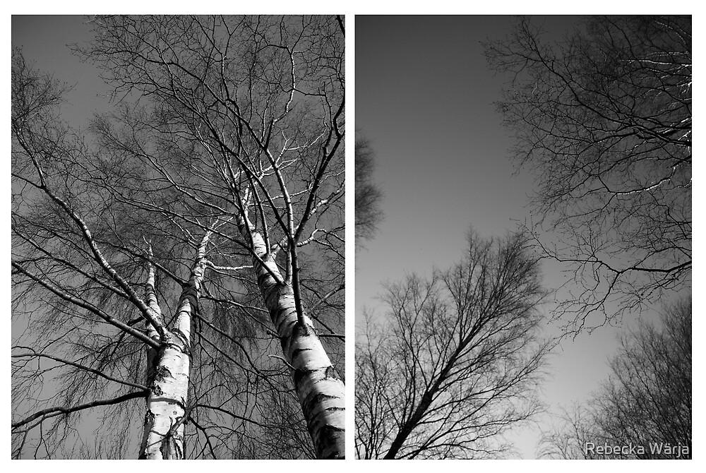 Trees by Rebecka Wärja