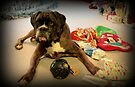 Is That Another Christmas Present For Me ?  - Boxer Dogs Series by Evita